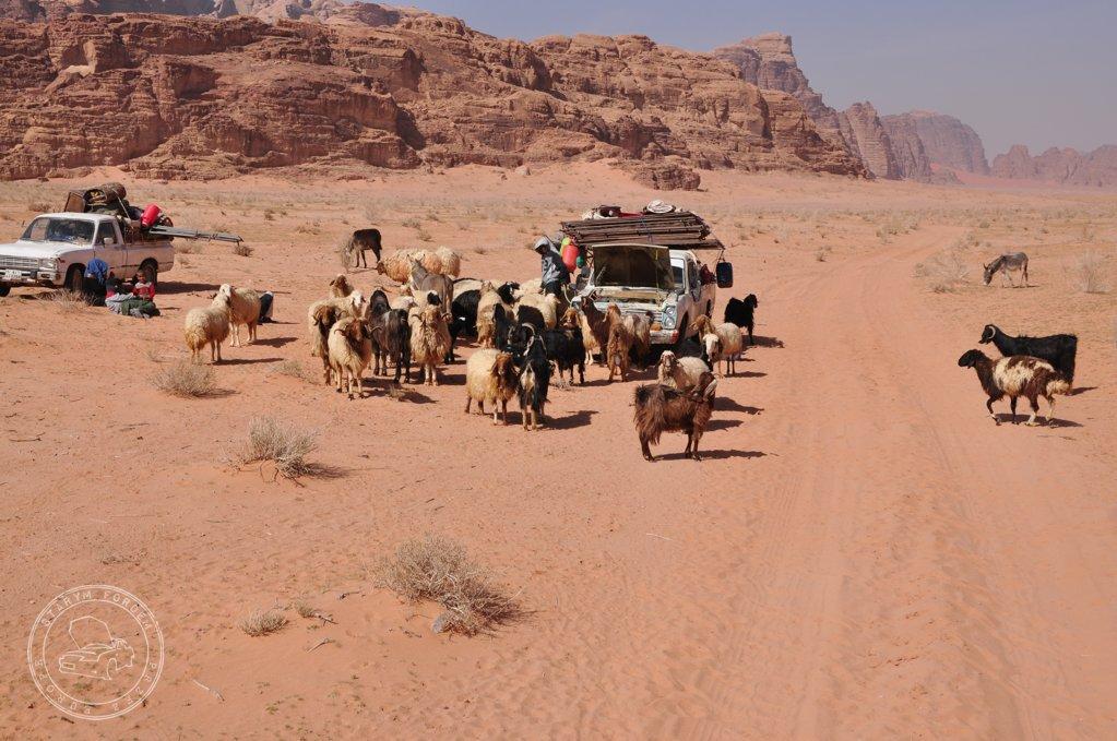 Nomadowie na Wadi Rum